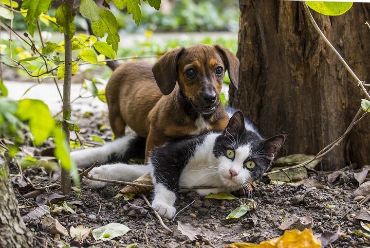 ನಾಯಿ, ಬೆಕ್ಕು, ಸಾಕುಪ್ರಾಣಿ,cat, dog, domestic