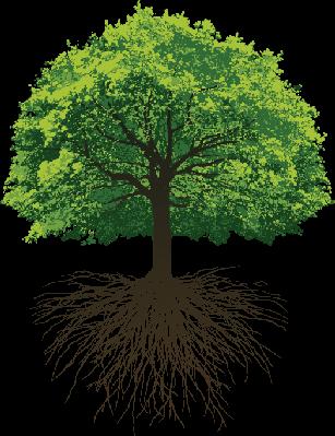 ಬೇರು ಮತ್ತು ಮರ, Roots and Tree