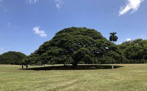 Tree ಮರ